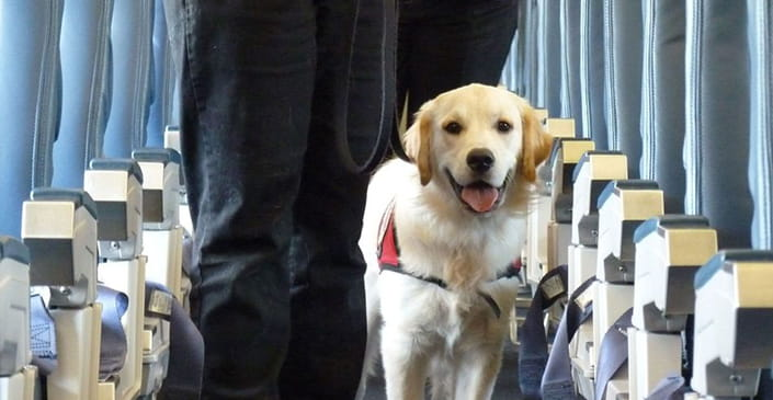 US Updates Travel Policies for Service Animals